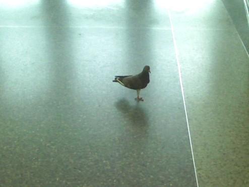 One Leg Pigeon